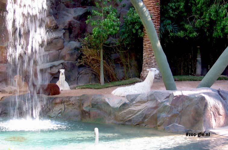 2006 S & R's Secret Garden, lamas