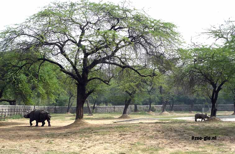 2009 Spacious outdoor rhino enclosure