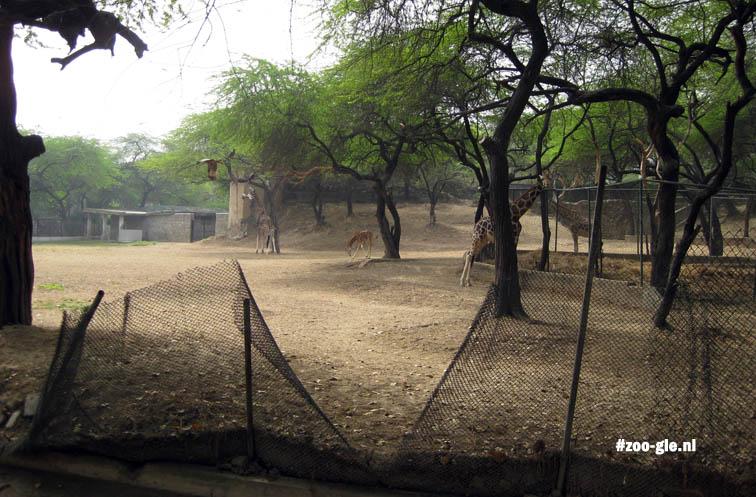 2009 Ook het giraffeneiland is kolossaal