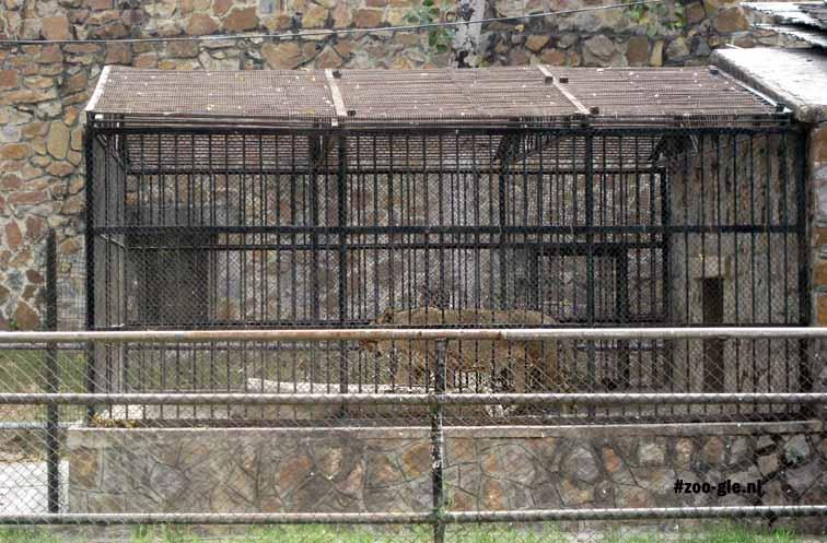 2009 Echte leeuwenkooi