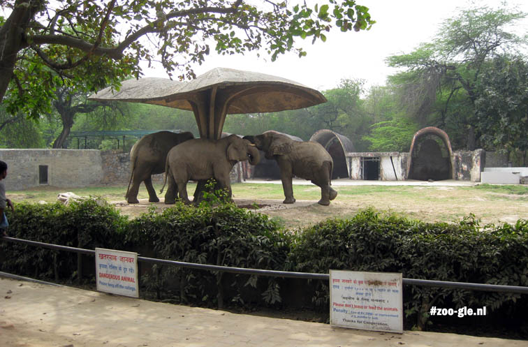 2009 Elephant compound
