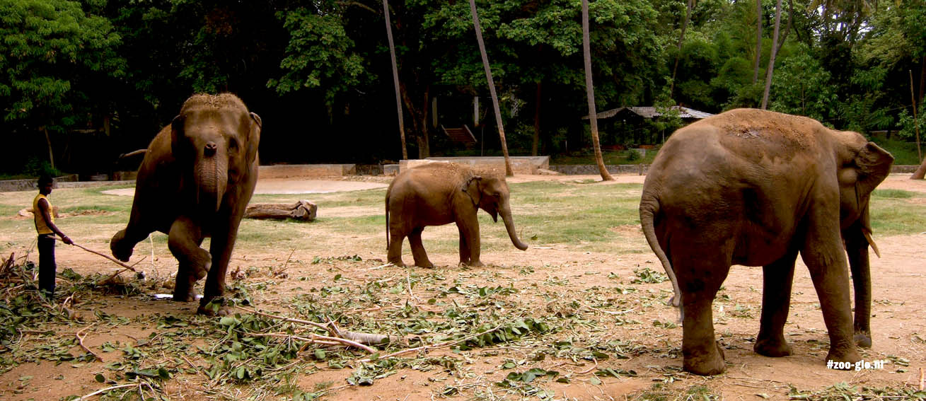 partners: mysore zoo