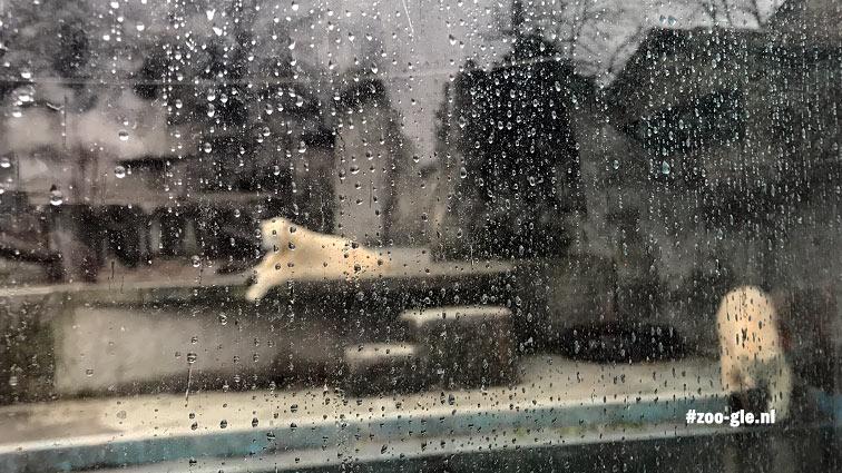 2019 Zachtjes tikt de regen tegen het ijsberenraam