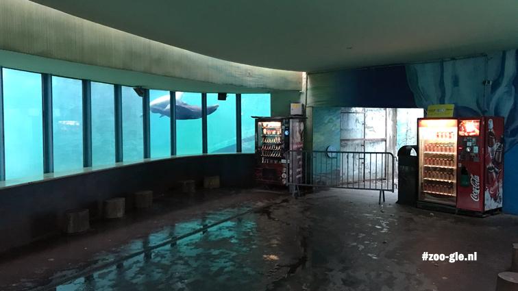 2019 Onderwatervenster lager gelegen zeeleeuwenbassin