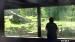 2014 Verzorger lapt ramen bij de tijgers
