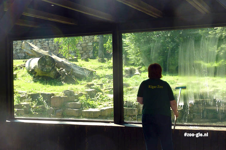 Zookeeper cleaning the windows at the tiger paddock