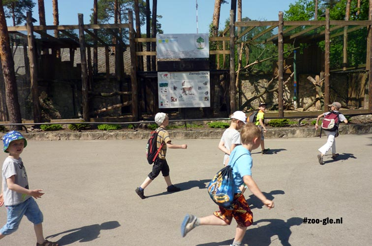 2014 Children running in front of the lynx enclosure