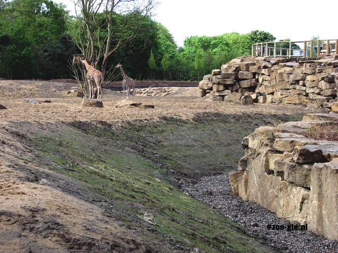 2009 Afrikaanse savanne