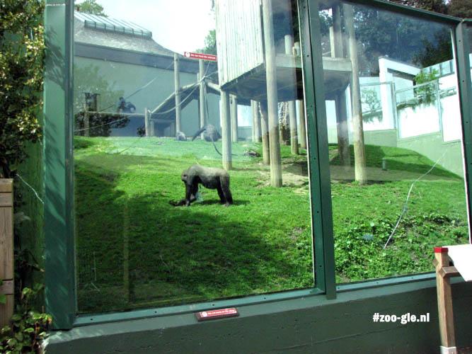 2009 Buitenverblijf gorilla's