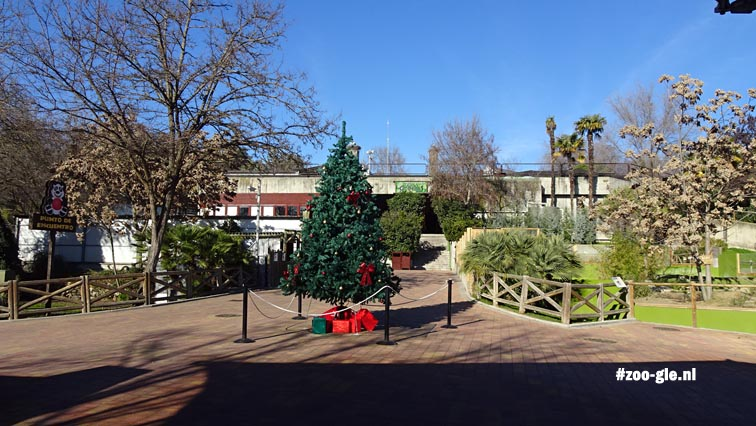 2016 Christmas tree in front of gorilla house