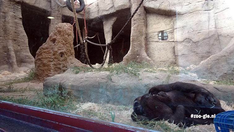 2016 Gorilla enclosure