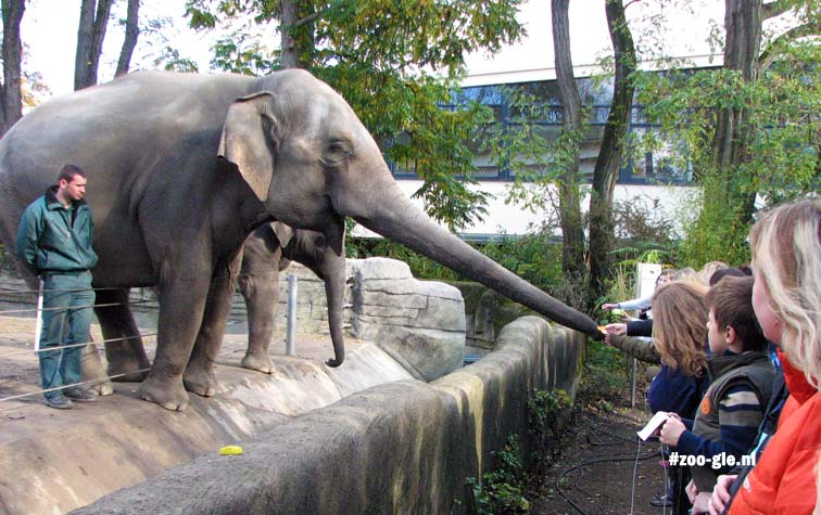 2007 Feeding elephants