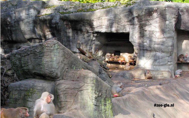 2007 Apenrots bevolkt door mantelbavianen
