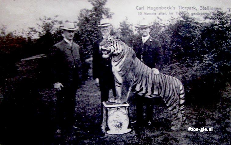 2007 Foto van Hagenbeck met tijger