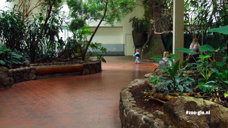 2006 Interior of The South American Tropical Forest
