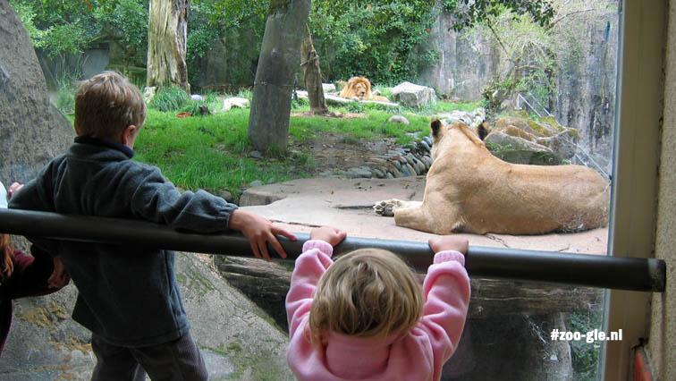 2006 Lion terrace