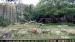 2006 Tiger terrace