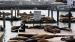 2006 Californische zeeleeuwen Fisherman's Wharf