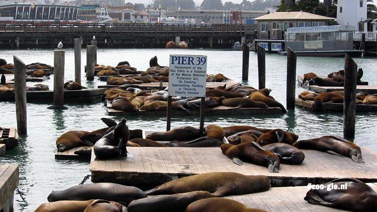2006 California sea lions Fisherman's Wharf