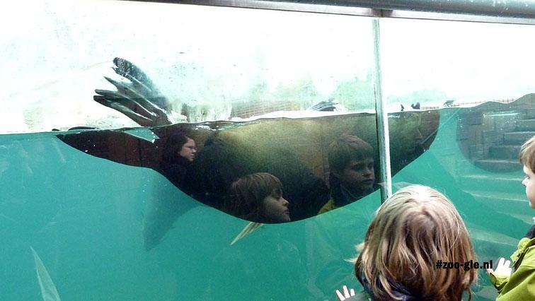 2010 Onderwater viewing