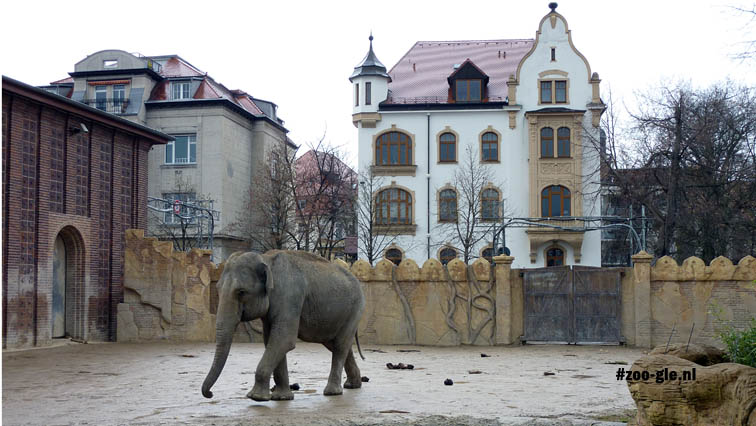 2010 Asian elephant with Leipzig in the background
