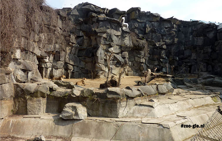2013 Outdoor lion enclosure