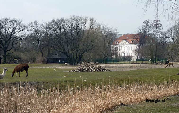 2013 Lama's met op de achtergrond Schloss Friedrichsfelde
