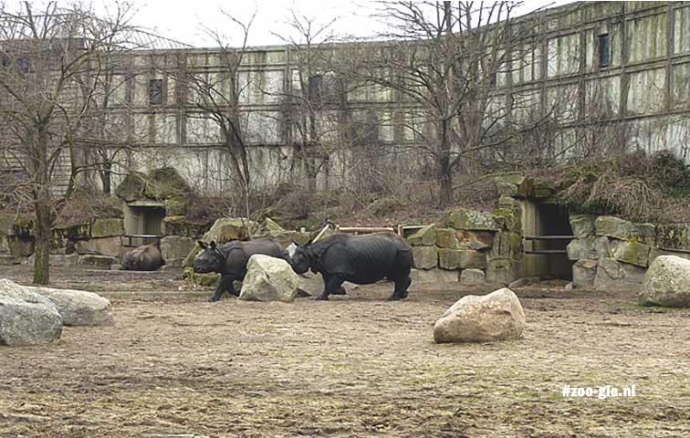 2013 Dikhuidenhuis, neushoorns