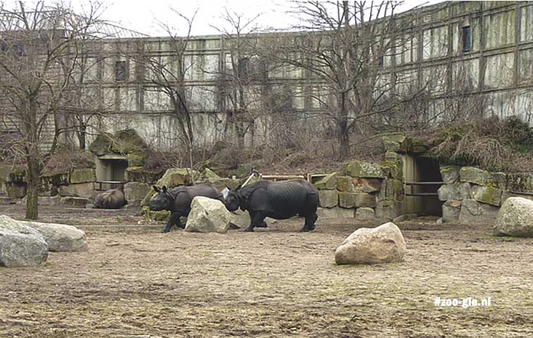 2013 Pachyderm House: rhino's