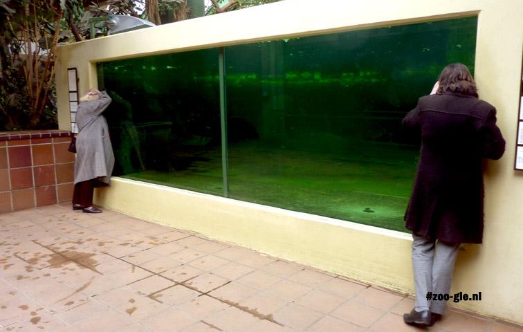 2013 Bassin voor zeekoeien in het dikhuidenhuis