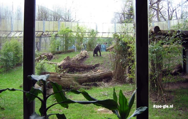 2005 Enclosure lowland gorilla