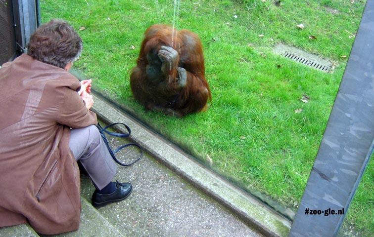2005 Visiting the orangutan