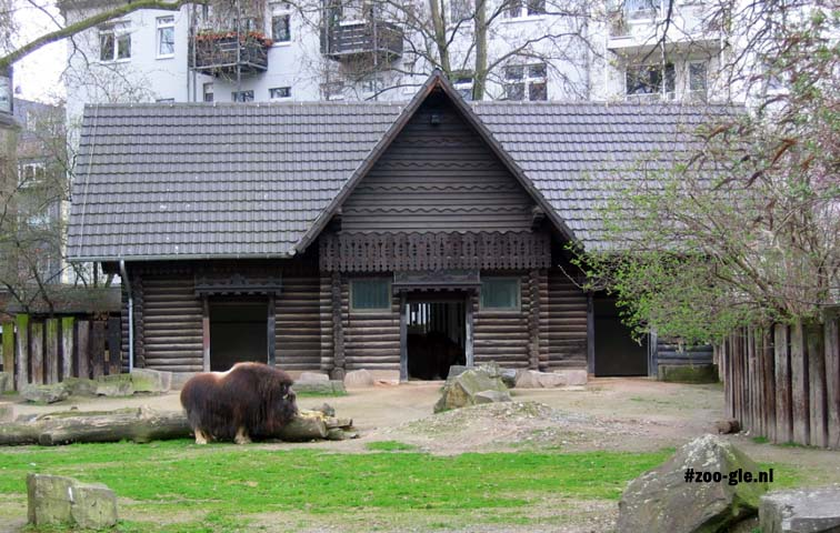 2005 Enclosure muskoxen