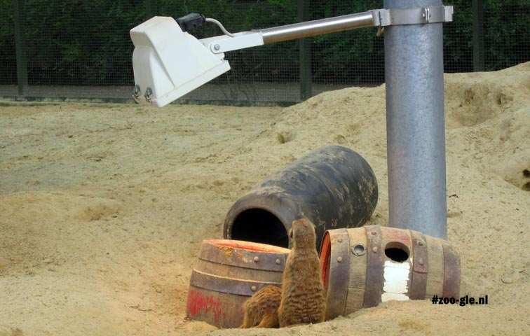 2005 Heating meerkat enclosure
