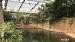 2017 Zwemmende nijlpaarden in het Hippodom