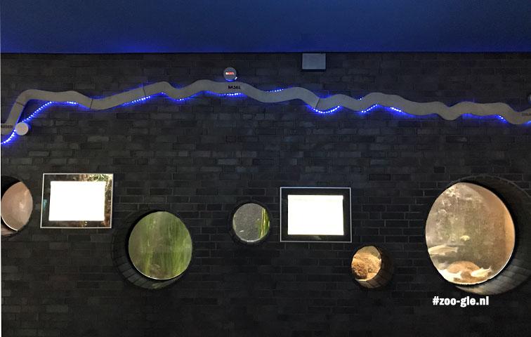 2017 Presentatie vissen die in de Rijn leven