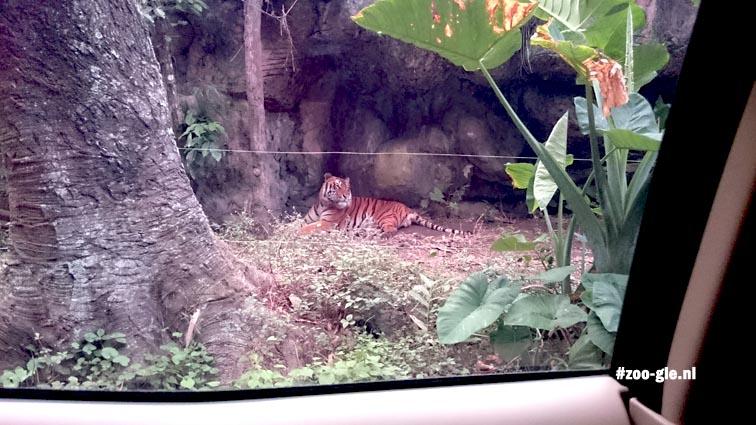 2017 Dicht langs tijgers