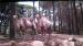 2017 Kamelen zijn er ook op Java