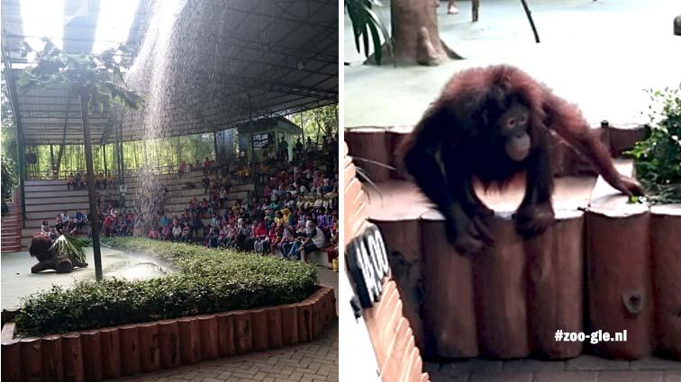 2017 Een theaterstuk waarin orang-oetan bijna weet weg te komen