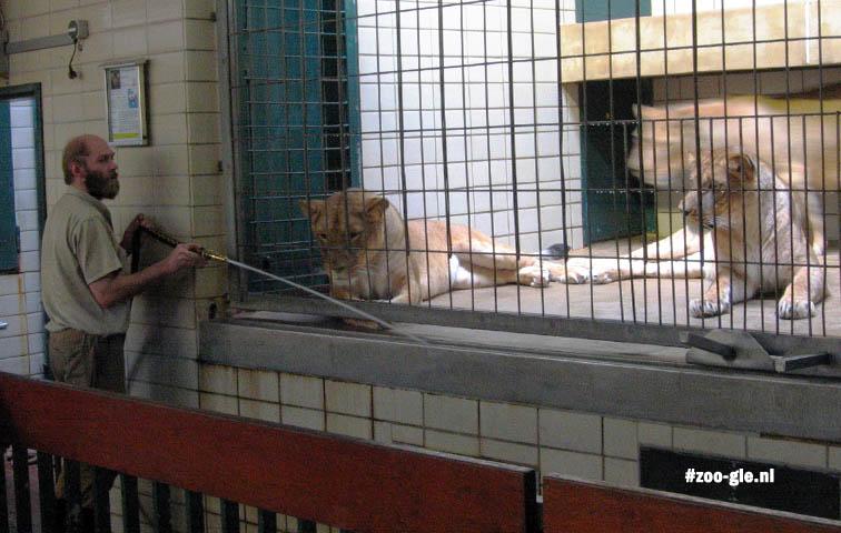 2007 Verzorger in het roofdierenhuis