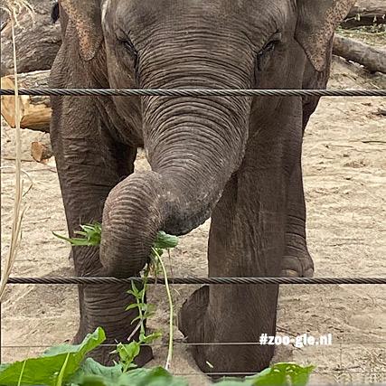 2020-05-15 Kneeling elephant with beautiful wrinkles