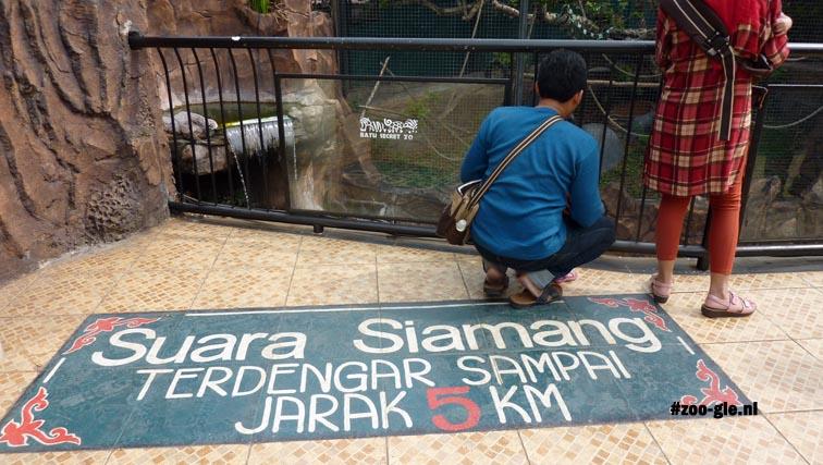 2017 Educatie: siamangs zijn op 5 km afstand te horen
