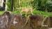 2017 Een enorm stukje wilde natuur #wildlife