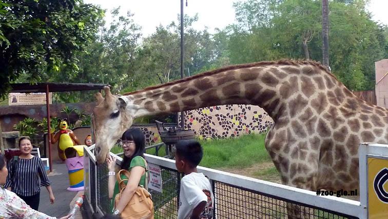 2017 Passend patroontje op muur achter giraf