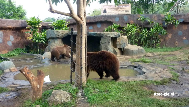 2017 Het bruine berenverblijf
