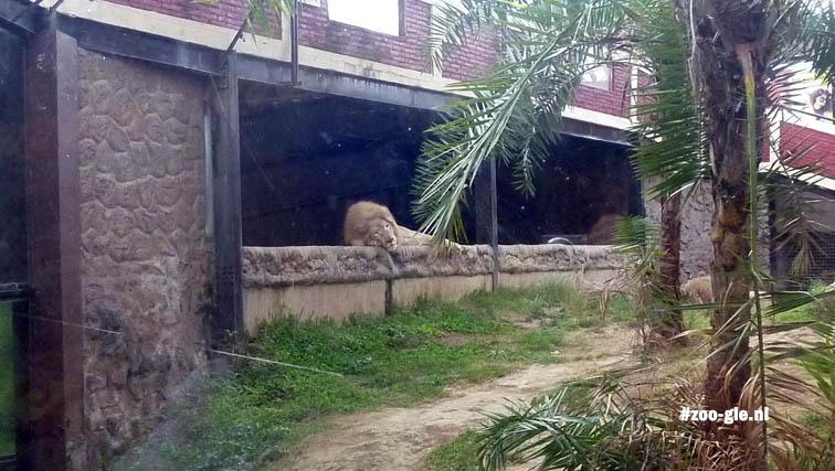 2017 Leeuwenverblijf