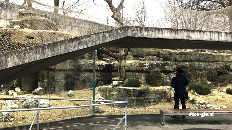 2018 Persian Leopard enclosure - The concrete wall at the rear transitions into the roof of the viewing window
