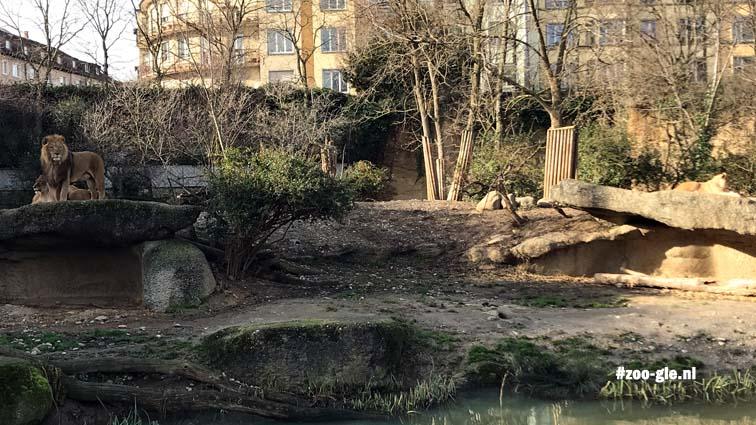 2018 Lion terraces city zoo