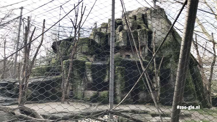 2018 Nu sneeuwluipaard en Java-apen bij oude steenbokkenrots