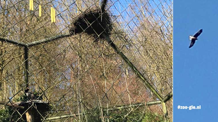 2018 Nesten in en op de kooi en n vrije roofvogel